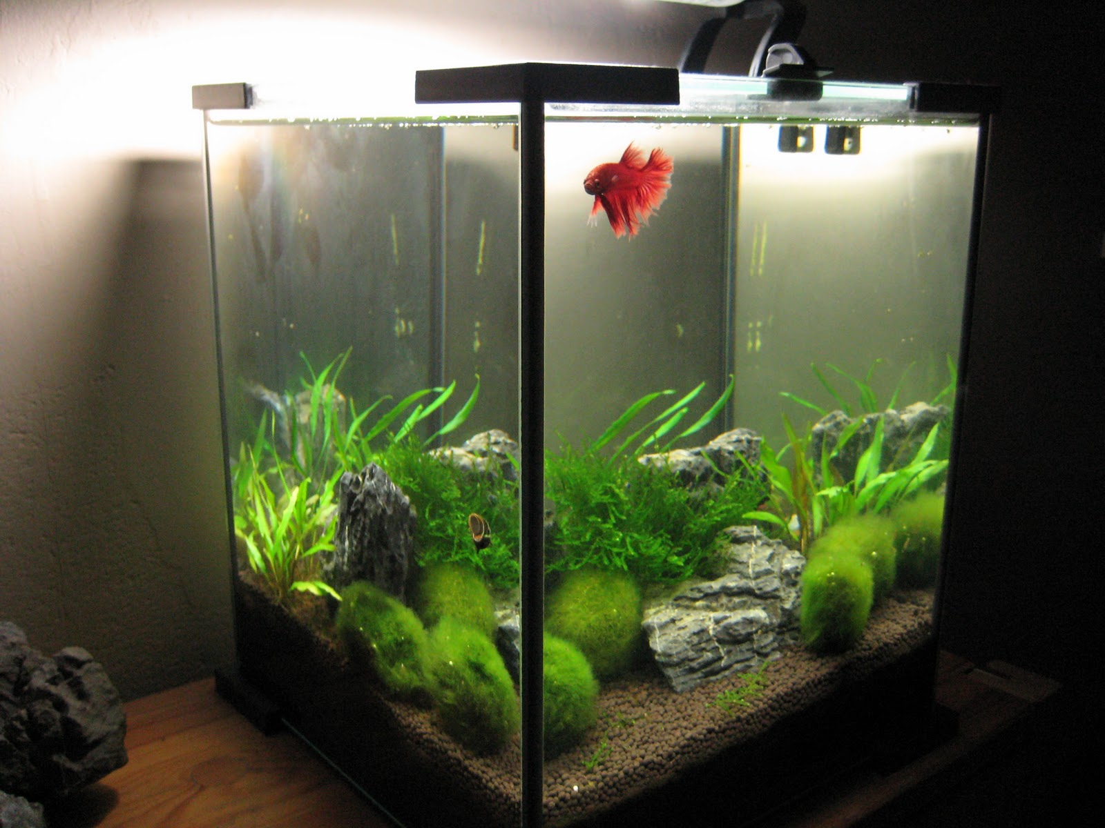 My aquarium scapes for Aquarium boule 20 litres