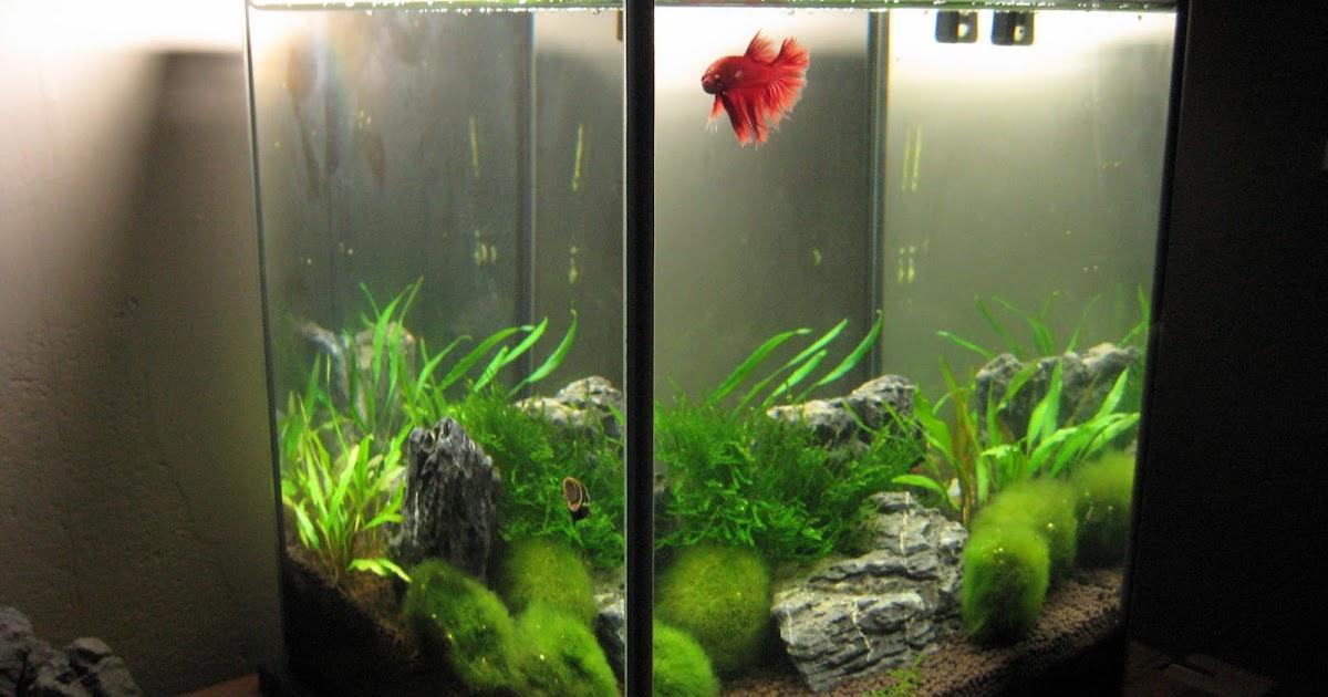 my aquarium scapes 20 liters nano cube