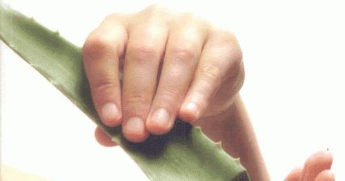 Cara Menghilangkan Karang Gigi Secara Herbal