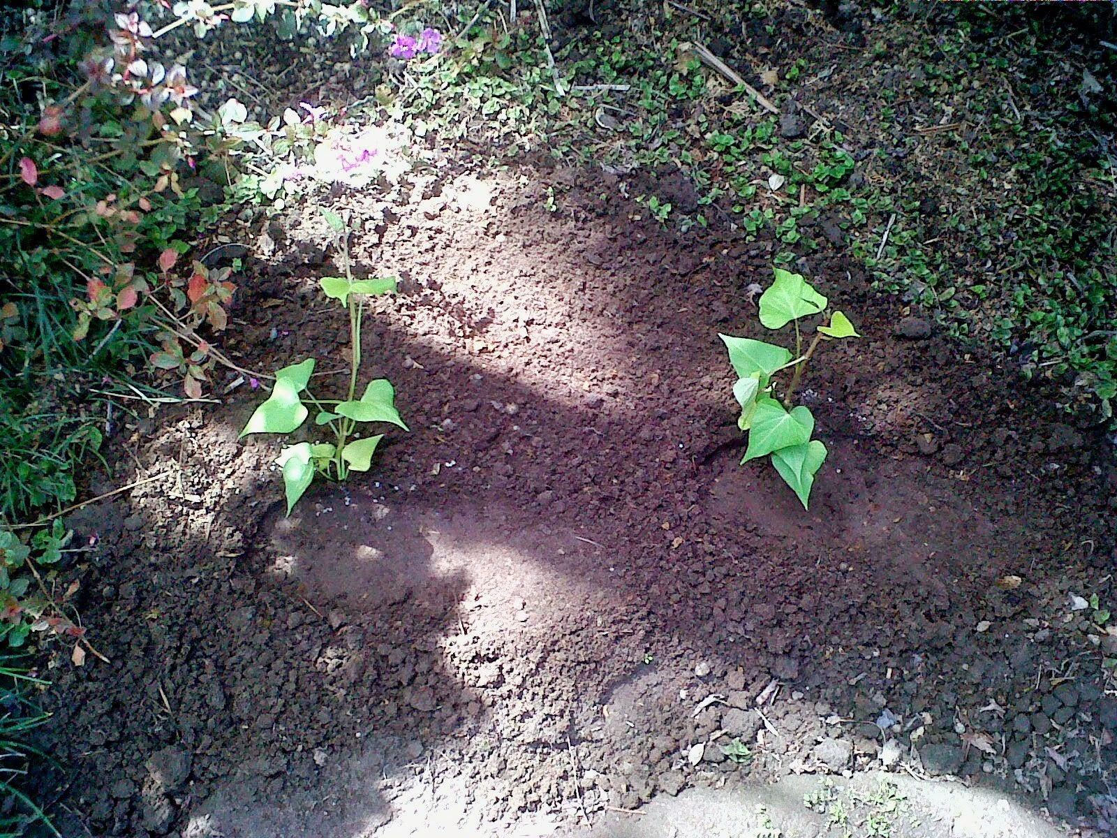 urban garden and backyard farming south africa april 2014