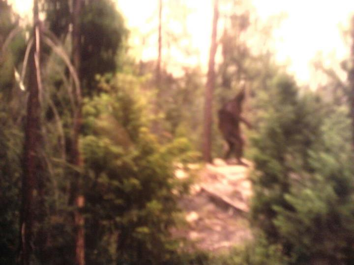 Bigfoot Evidence New Footage Happy Camp Bigfoot Photo
