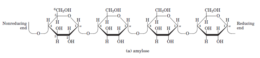What Is the Function of Salivary Amylase?