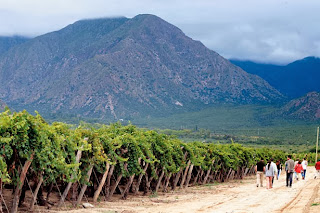 vineyards wines cafayate salta argentina