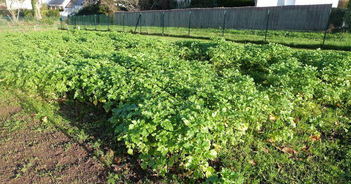 Les jardins familiaux de feunteun don couvrir le sol pour for Couvrir les plantes en hiver