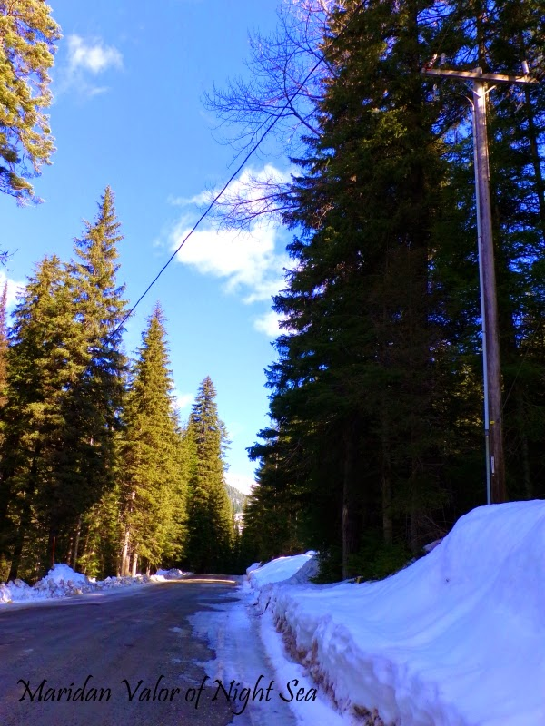 I went for a drive and what did I spy...snow, trees, blue sky, shadow and shade. photo by Maridan Valor.