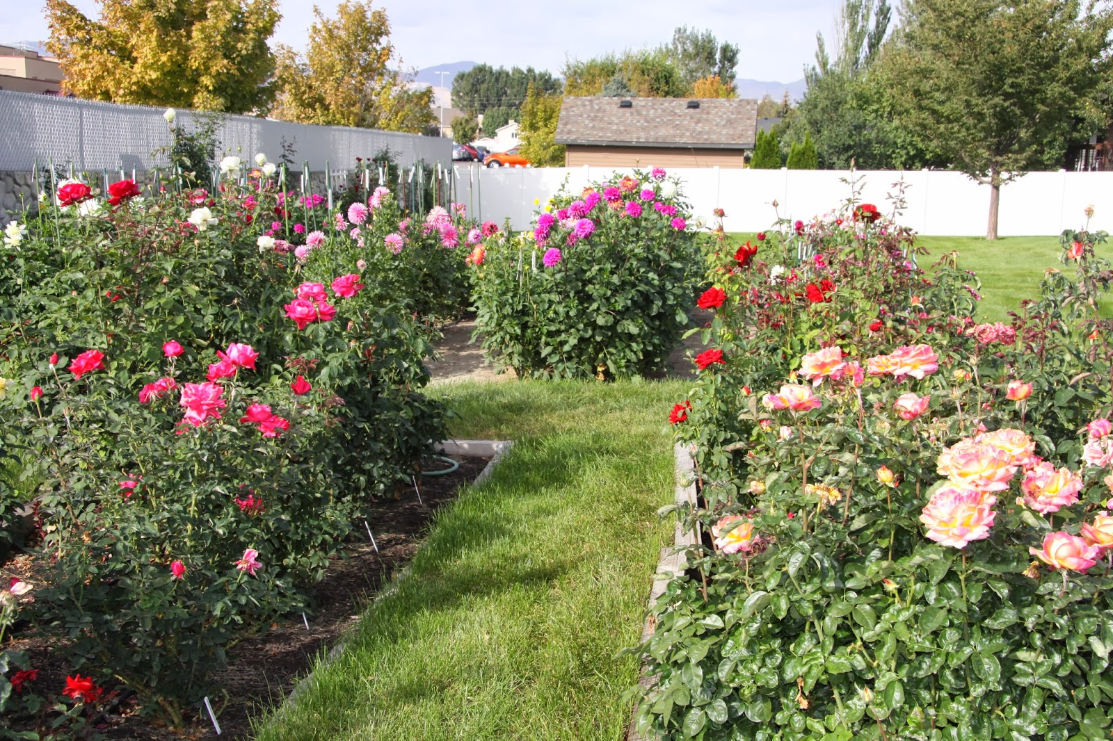 Utah Dahlia Society Dave Ross Garden Tour