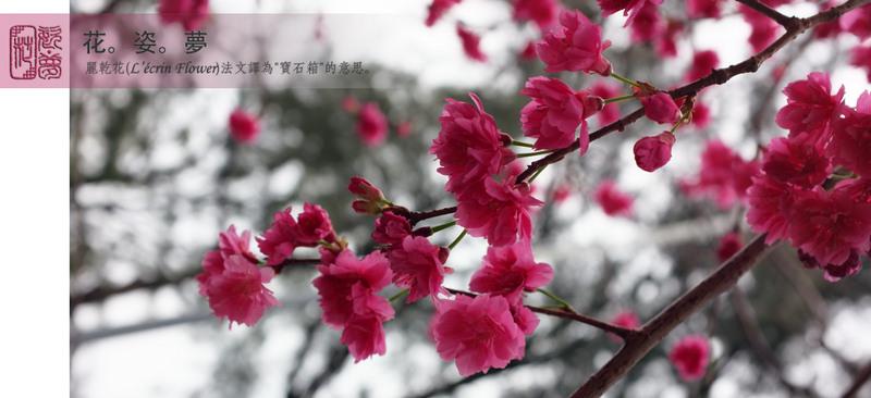 花。姿。夢