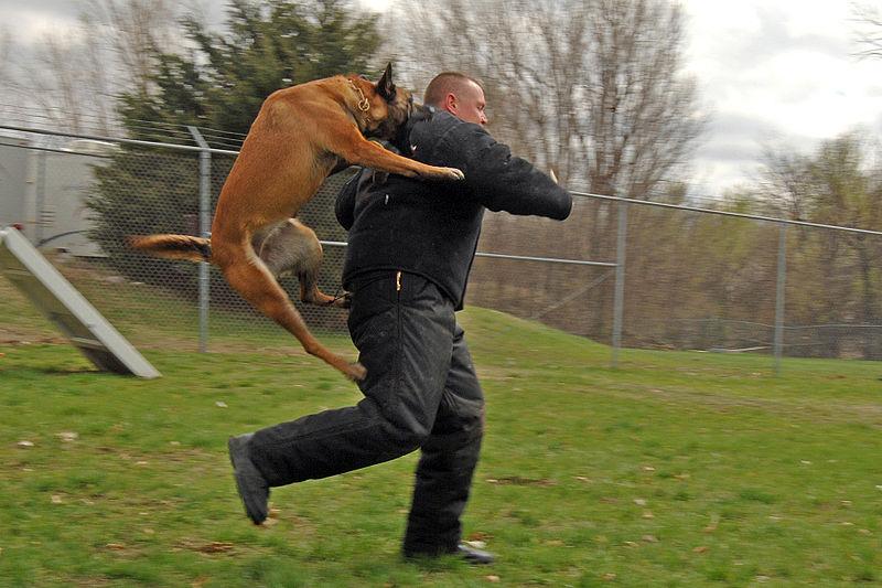 lesurvivaliste: Le choix du chien de sécurité.