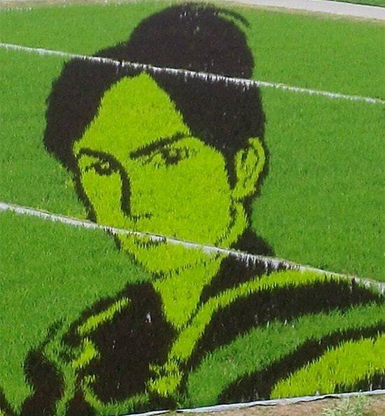 Rice Art in Japan