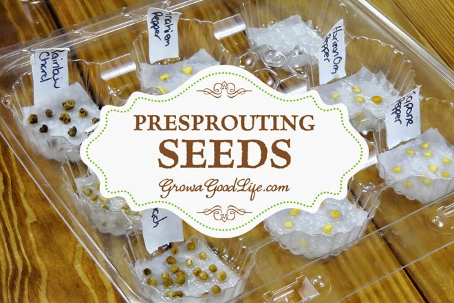 Benefits of Pre-sprouting Seeds, shared by Grow a Good Life at The Chicken Chick®