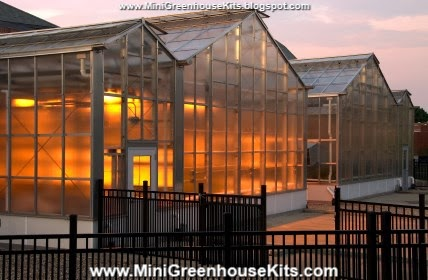 Plant the Best Greenhouse Flowers