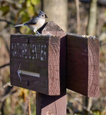 Tufted Titmouse on nature center guide sign