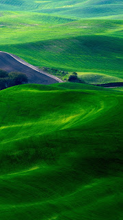 Dreamy Green Fields iPhone 5 wallpaper 2013