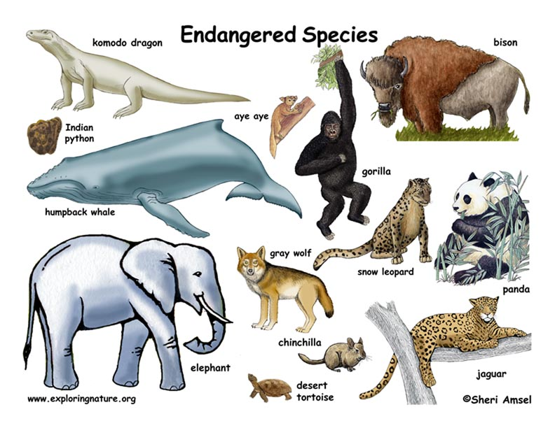 Who is visiting our earth endangered species blog