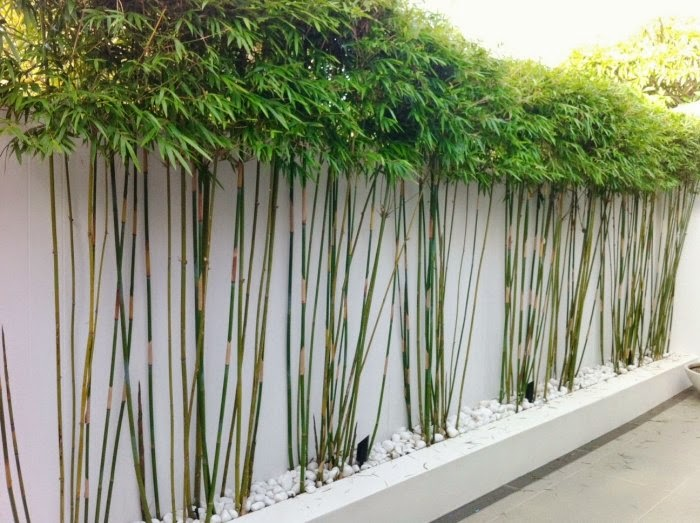 Bamboo in the garden a fascinating and versatile plant for Garden design using bamboo