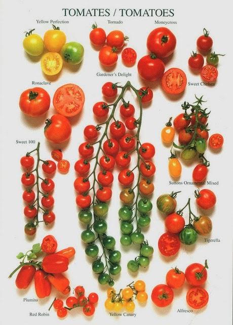 Alternative Green World Tomato Varieties