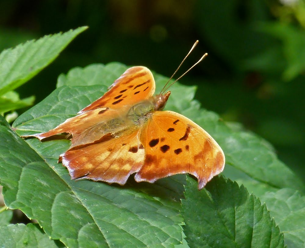 12 Rare-Sighted And Appealing Butterfly SpeciesButterfly Species Names