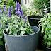 Plants by my front door