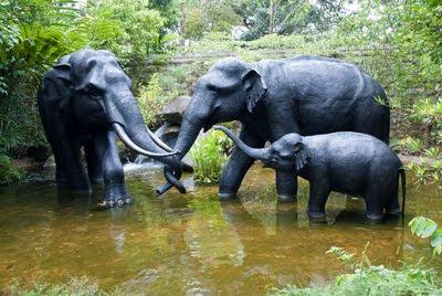 Familia de elefantes tomando agua en el pozo - Paquidermos