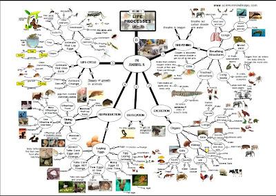 Peta Minda Sains
