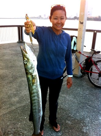 Yellowtail Barracuda [Sphyraena Flavicauda] also know as Saw Kun 沙君 [Hokkien] or Ikan Kacang [malay] weighing 4kg plus caught by Joanne at Woodland Jetty on 9th July 2013 using live Five-spot Herring or Assam fish (local), Selangat (malay) on float.