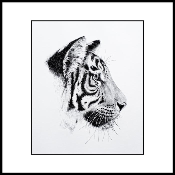 Tiger Faces   My Tiger Blog!