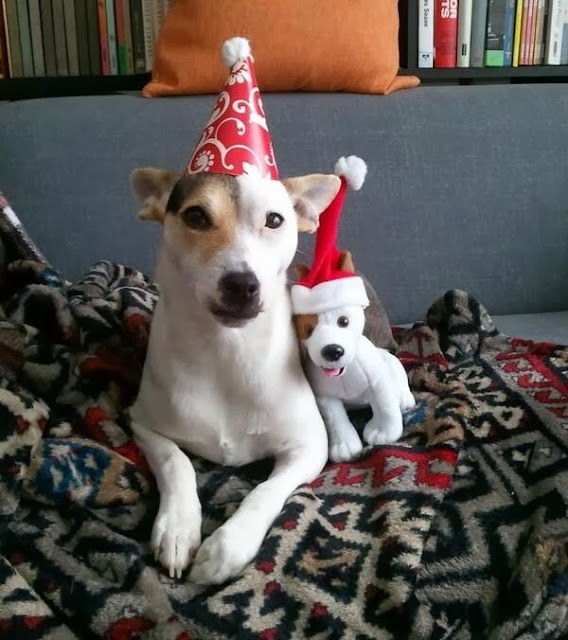 adorable dog pictures, dog with stuffed dog wear hat