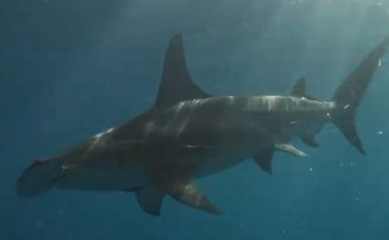 Great hammerhead shark for Shark tank fairy door
