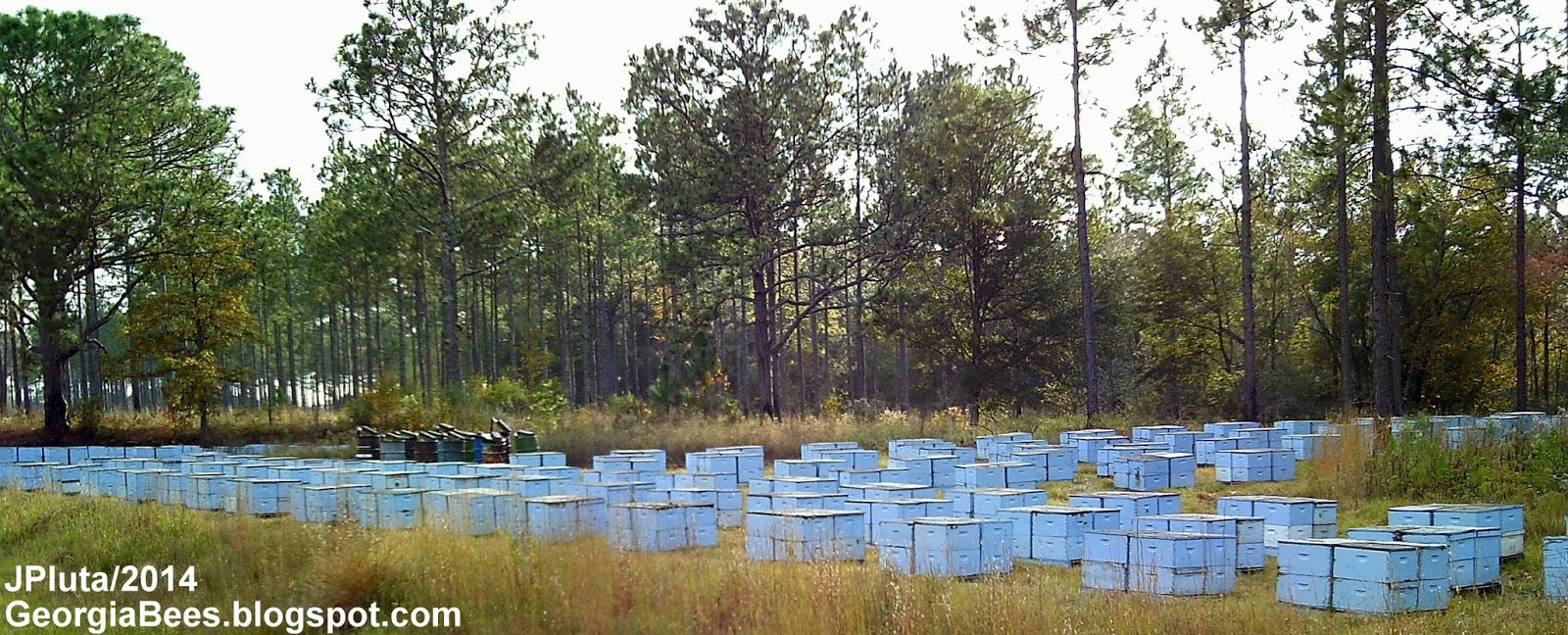 Outyard Commercial Beehive Pallets Holding Yard
