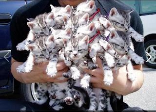 chatons drôles et mignons