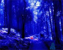 Juegos de Escape Halloween Spooky Forest Escape