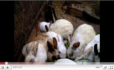 福島 無耳兔