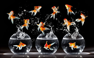 Goldfish wallpaper for walls