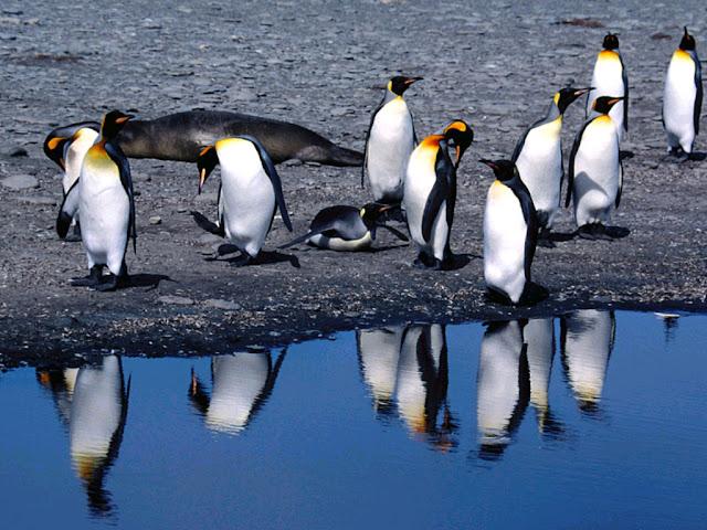 Penguins near Water