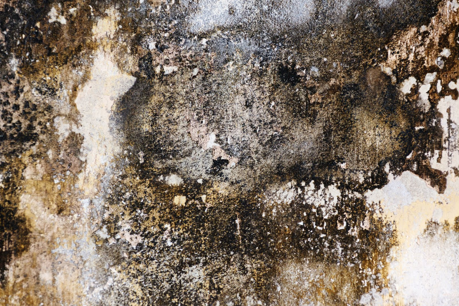 Diy black mold removal - Black Mold Is Usually Found Inside Houses With Excessive Moisture Injury To Other As Well As Wallboard Surfaces Much Is Made Of Such A Mould S Toxicity