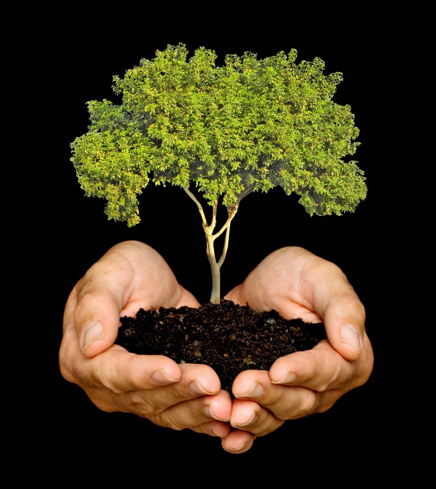 Detr s de cada revista reforesta sta primavera for Arboles para plantar en invierno