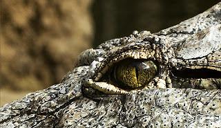 Ausflugsziel am Rhein für Familien, Reptilienzoo Königswinter, Reptilien, Zoo, Krokodil, Alligator, Echse