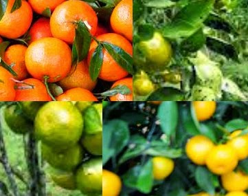Cara sehat membuat jus jeruk