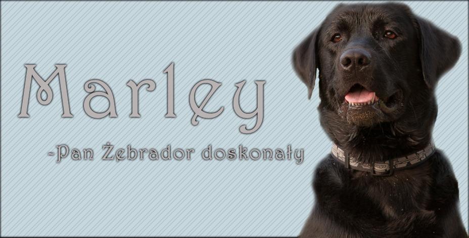 Marley- Pan Żebrador