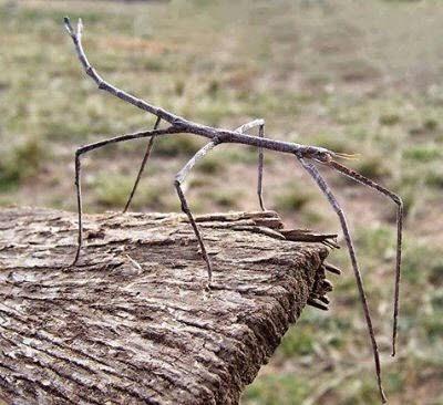 حشرة ليست كالحشرات