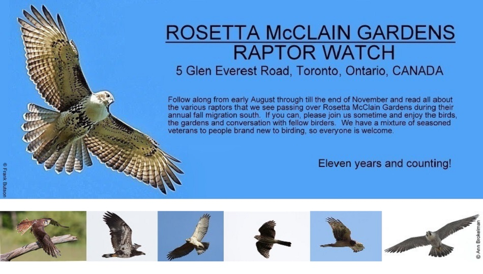 Rosetta McClain Gardens Raptor Watch