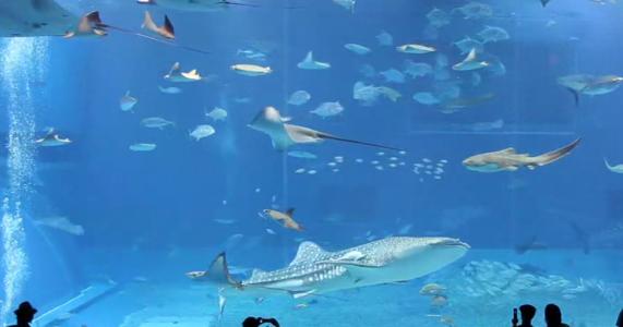 Image Result For Acrylic Aquarium