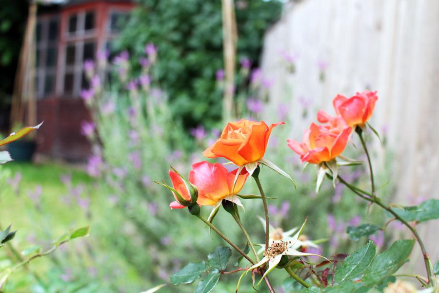 Blooming garden!