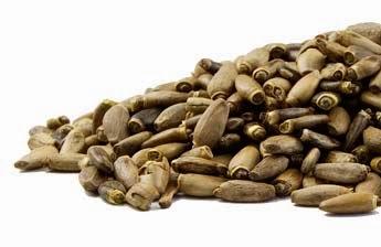 Ekstrak biji benih pokok susu tisel (Milk Thistle Seed) dtx shaklee