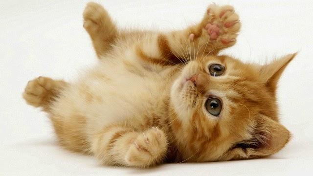 hình mèo con dễ thương