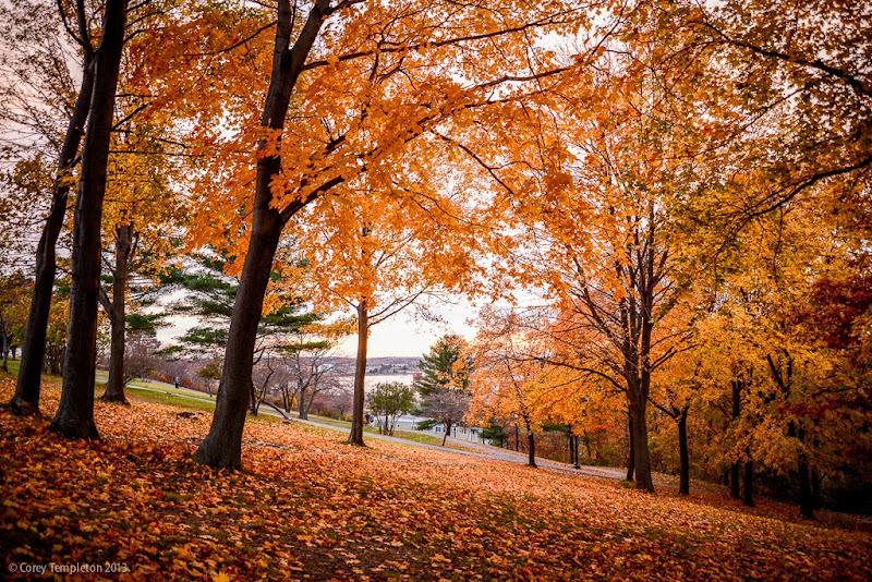 Portland, Maine Western Promenade Foliage. November 2013.  Photo by Corey Templeton.