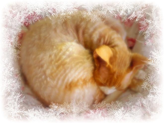 Misses Peach's Meowz