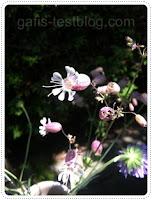Wilde Sommerblümchen