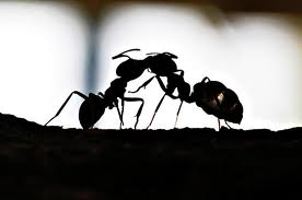 Любопытный муравей поза в сексе