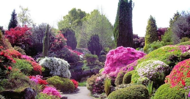 Gambar Pemandangan Taman Bunga Download Gambar Gratis